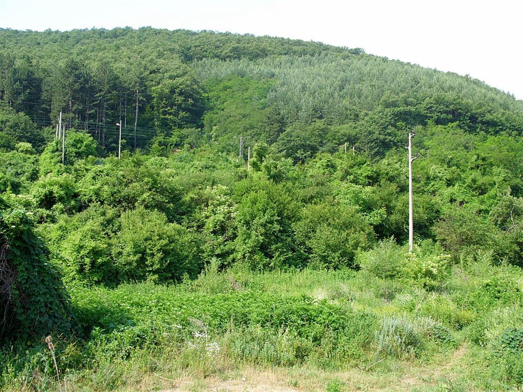ИАГ публикува списъци на териториите, които са придобили характеристики на гора
